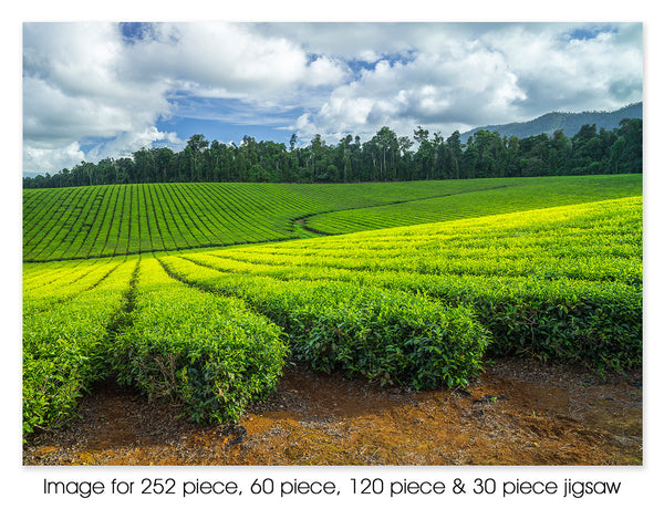 Nerada Tea Plantation, Atherton QLD