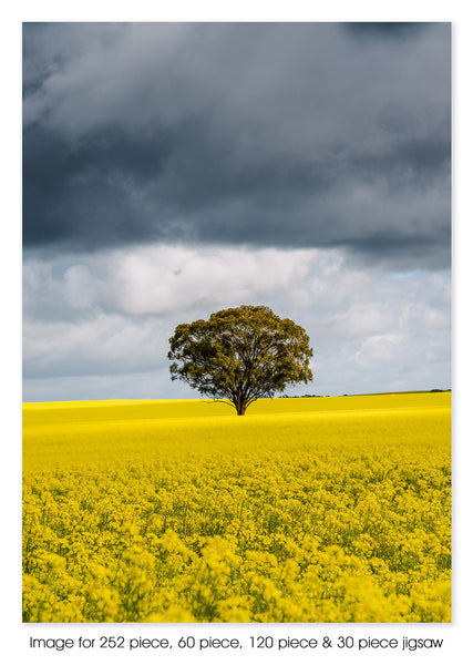 Canola fields, St Arnaud VIC