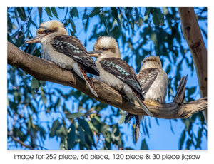 Three Kookaburras