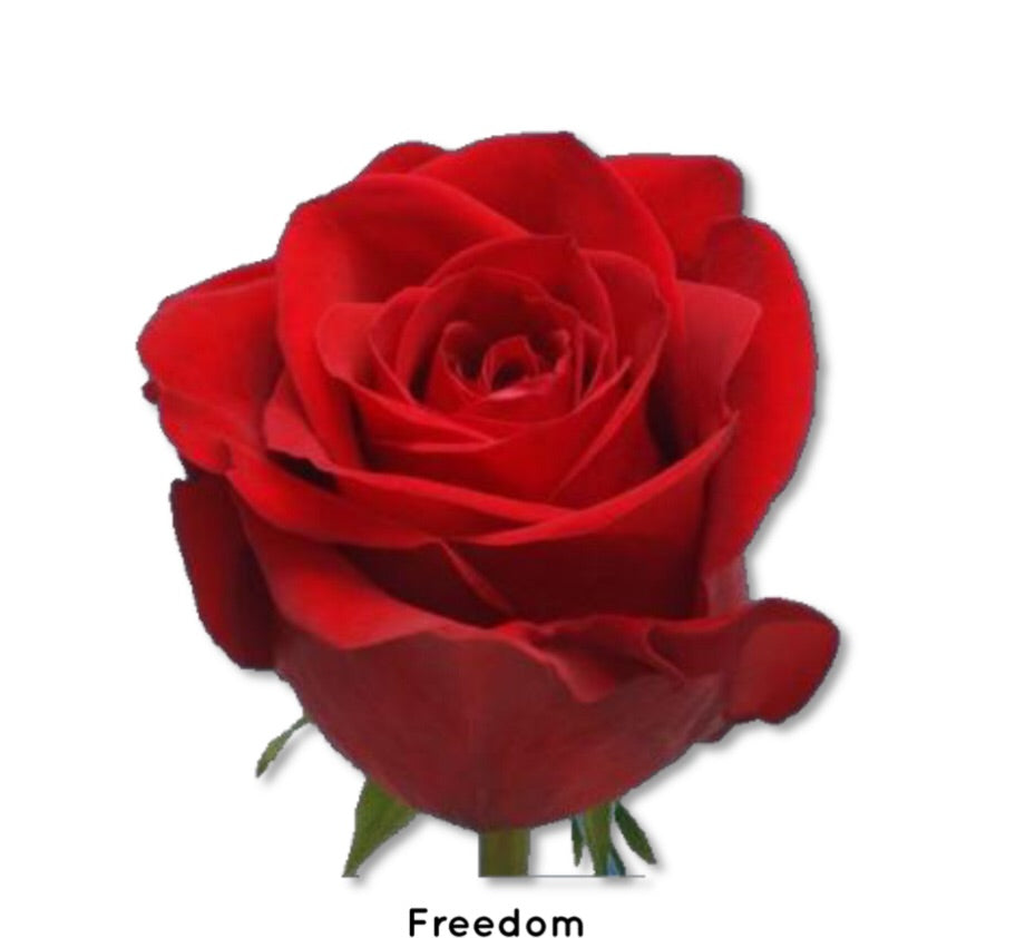 Red Freedom roses