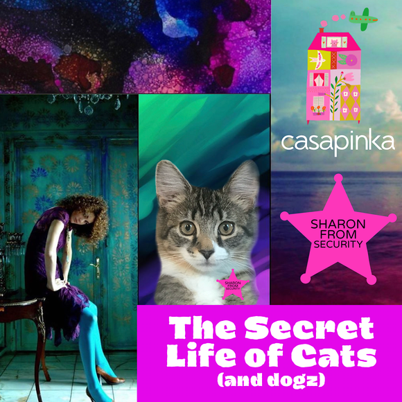 The Secret Life of Cats (and dogz)