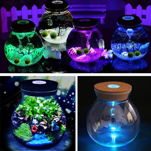 Moss Micro Landscape Glass Bottle with LED Light Plant Vase Home Decor - MooBooExpress