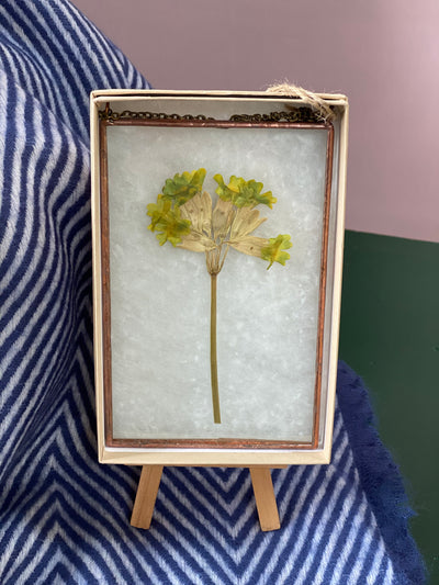 Small Wallflower - Cowslip