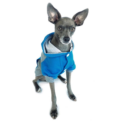 raglan style turquoise gray dog hoodie front view on sitting dog