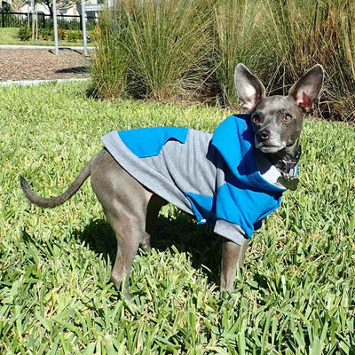 raglan style turquoise gray dog hoodie side view on standing dog in park