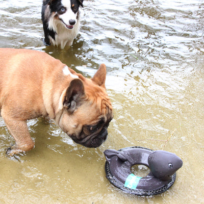 Shark Outdoor Floating Dog Toy