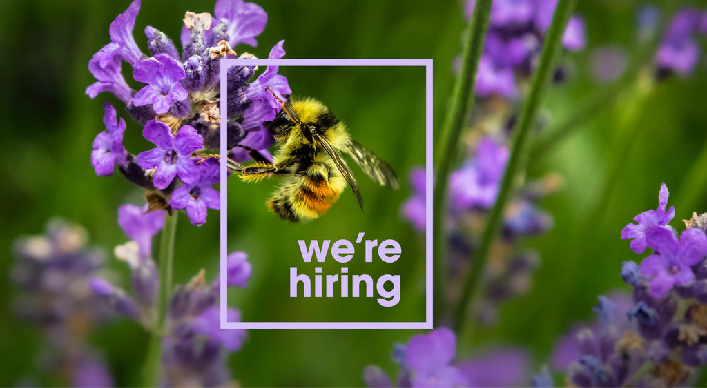 We're hiring - join our team of busy bees
