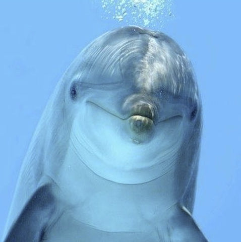 INIS FRAGRANCE DOLPHIN