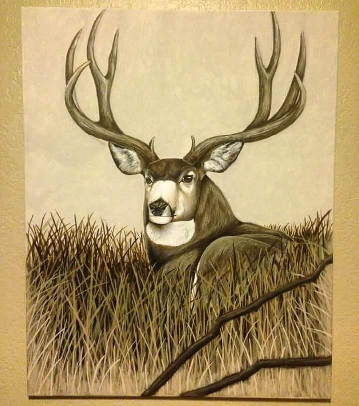 Resting Mule Deer - Original Painting