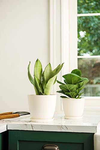 Mkono Plastic Planters with Saucers, Indoor Set of 5 Flower Plant Pots Modern Decorative Gardening Pot with Drainage for All House Plants, Herbs, Foliage Plant, and Seeding Nursery, Cream White, 6.5""