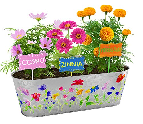 Paint & Plant Flower Growing Kit - Kids Gardening Science Gifts for Girls and Boys Ages 4 5 6 7 8 9 10 - STEM Arts & Crafts Project Activity - Grow Your Own Cosmos, Zinnia & Marigold Flowers