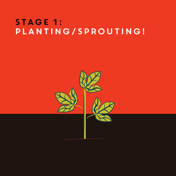 Community Brew: Planting & Sprouting