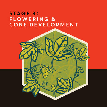 Community Brew: Flowering Stage