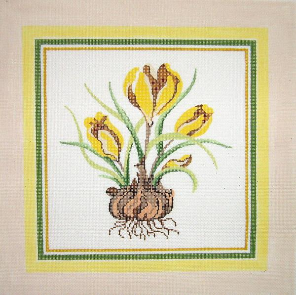Crocus Botanical
