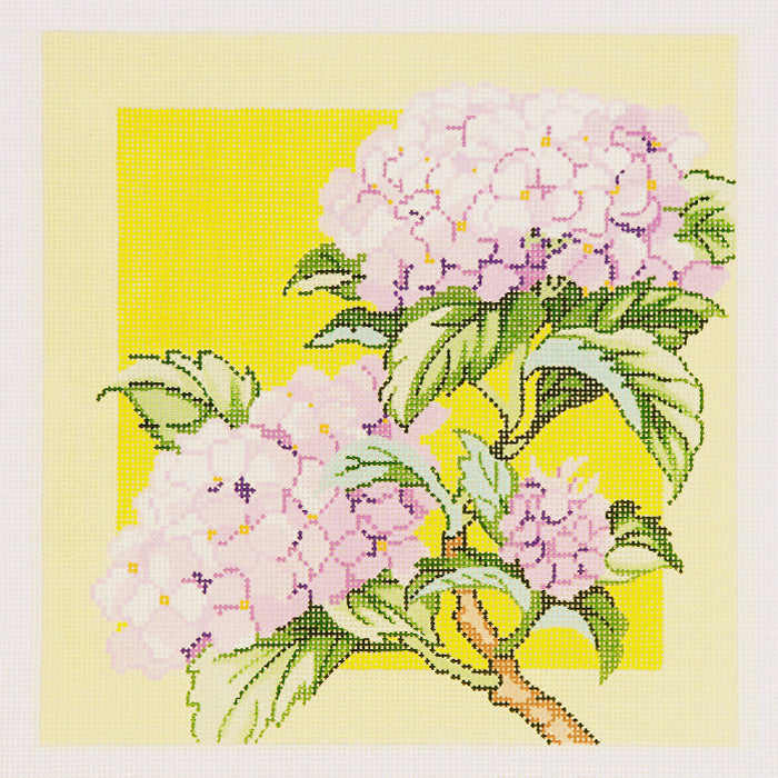 Hydrangea on Yellow