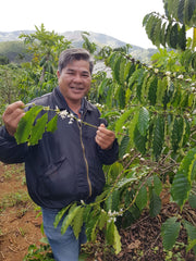 Guide coffee farm