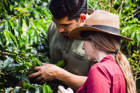 looking at coffee growing with coffee producer