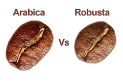 Robusta Arabica coffee bean