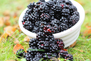 Blackberries the gateway to foraging...
