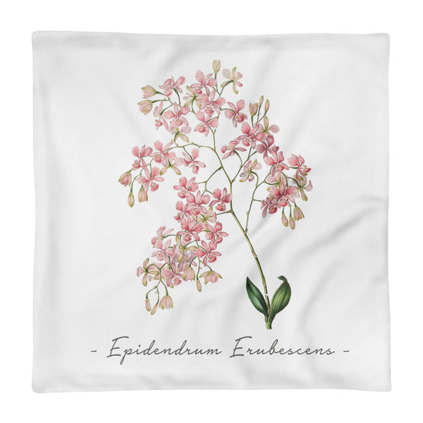 Vintage Orchid Illustration Square Throw Pillow Case ONLY (Epidendrum Erubescens)