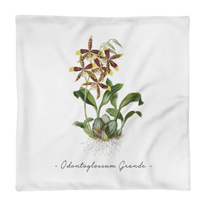 Vintage Orchid Illustration Square Pillow Case ONLY (Odontoglossum Grande)