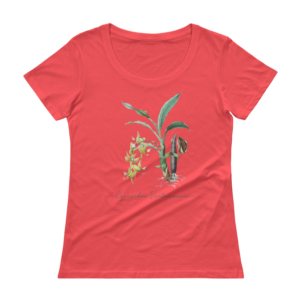 Vintage Orchid Illustration Women's T-Shirt (Cycnoches Ventricosum)