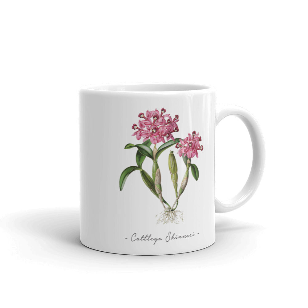 Vintage Orchid Illustration On A Mug (Cattleya Skinneri w/ Fir and Bramble logo)