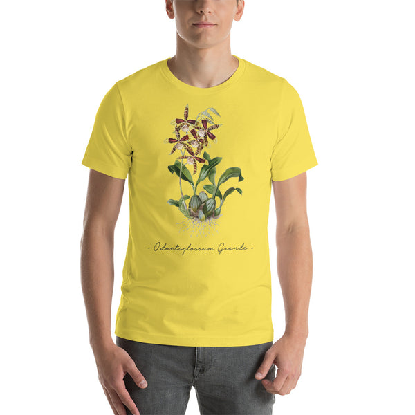 Vintage Orchid Illustration Short-Sleeve T-Shirt (Odontoglossum Grande)