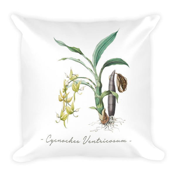 Vintage Orchid Illustration Square Throw Pillow with Stuffing (Cycnoches Ventricosum)