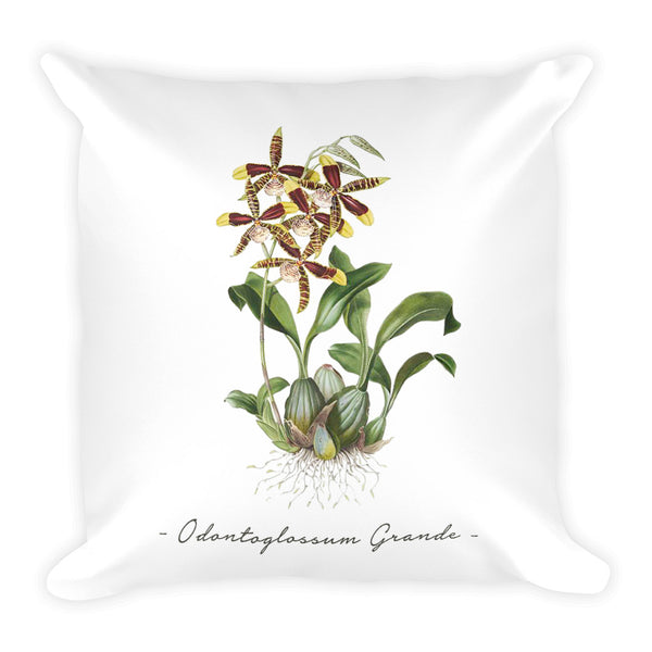 Vintage Orchid Illustration Square Throw Pillow with Stuffing (Odontoglossum Grande)
