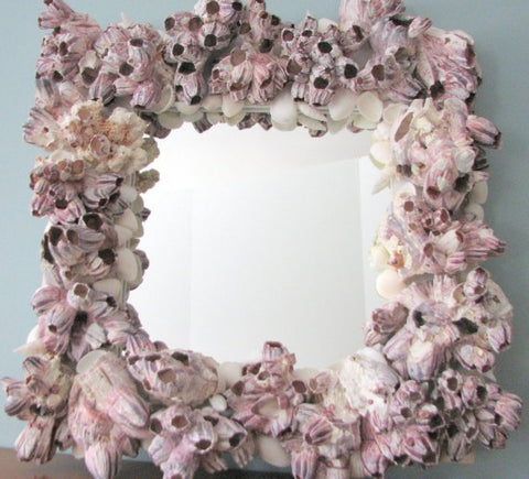 custom seashell mirror, barnacle mirror, custoom shell mirror