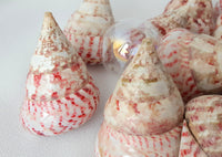 Red Pink Trocha Seashell, Red Pink Trochus Specimen Shell, Red Pink Wedding Shell, 1PC, 2.5""