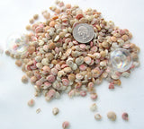 pink umbonium shells, umbonium, tiny pink shells, tiny pink seashells, small pink shells, small pink seashells, tiny craft shells, tiny jewelry shells, beach wedding decor