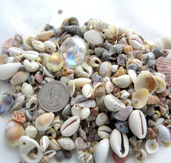small shell mix, small seashell mix, tiny shell mix, tiny seashell mix, small wedding shells, tiny wedding shells, tiny craft shells