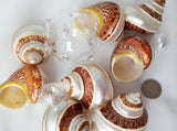 Pentholatus banded turbo, brown turbo shell, banded turbo shell, brown turbo seashell, brown banded seashell, turban seashell