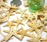 brown flat starfish, small brown starfish, small starfish, tiny starfish, flat starfish, Philippine flat starfish, beach wedding starfish,