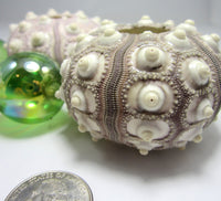 sputnik sea urchin, sputnick sea urchin, sea urchin shells, sea urchin seashells, beach wedding shells