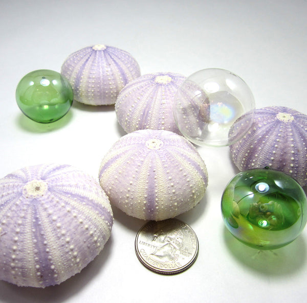 purple sea urchin, lavender sea urchin, lavender seashells, purple seashells, lavender shells, purple shells, beach wedding shells
