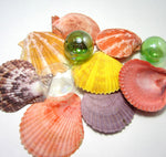 colorful shells, colorful seashells, colorful scallop shells, colorful scallop seashells, beach wedding shells, scallops