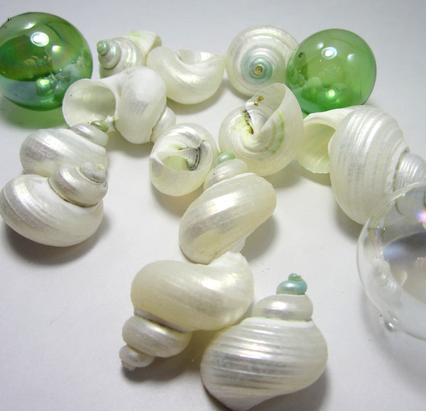 pearl turbo shells, white turbo shells, silver turbo shells, turbo shells, white wedding shells, beach wedding seashells