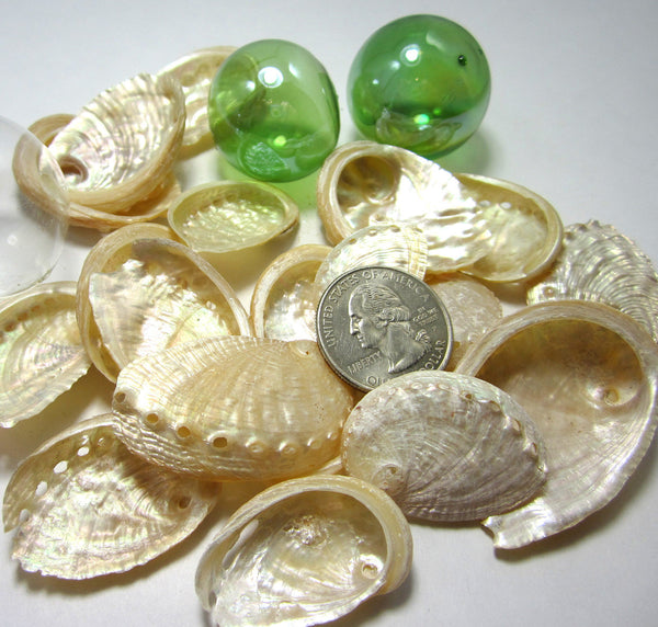 pearl abalone shells, pearl abalone seashells, beach wedding shells, tan abalone shells