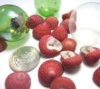 strawberry top shells, strawberry top seashells, red shells, red seashells, red craft shells