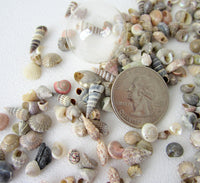 tiny seashells, tiny shells, jewelry making seashells, craft seashells, extra tiny shells, shell mix