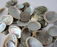 abalone shells, abalone seashells, small abalone shells, small abalone seashells, beach wedding shells, pearl abalone shells, white wedding shells