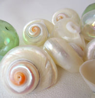 cinnerus shells, cinnerus seashells, white wedding shells, beach wedding shells, pearl shells, polished shells