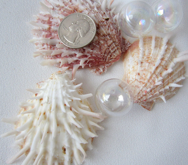 oyster shell, oyster seashell, specimen shell, oyster ducalis, white oyster, pink oyster, spiky oyster