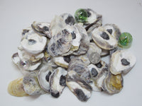 common oysters, oyster shells, oyster seashells, purple oyster shells, craft shells