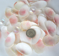 pink tellin shells, pink tellin seashells, pink beach wedding shells, pink craft shells, tellin
