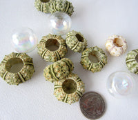 green sea urchin, tiny sea urchin, small sea urchin, little sea urchin, bumpy sea urchin