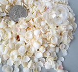 white cup shells, white cup seashells, beach wedding shell, tiny seashell, tiny white shells, tiny jewelry shells, tiny craft shells, bulk tiny shells